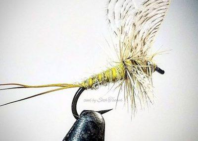 Seth Tasso Fly